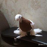 Исторические документы о голубях в ЦА и происхождении пород - последнее сообщение от Артем Артем