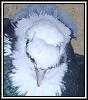 Патагонские голуби - последнее сообщение от Torkut