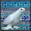 Узбекские бойные, лётные; двучубые, носочубые, чубатые голуби. - последнее сообщение от izet.12