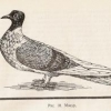 Открытки с голубями - последнее сообщение от Владимир 177