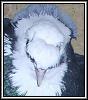 Русские чайки - последнее сообщение от Torkut