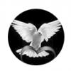 Нужна голубятня для съемки - последнее сообщение от Подольчанин